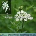 O mais favorável para 100% natural cnidium monnieri pó do extrato