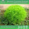 GMP Standard Manufacturer Supply Broom Cypress Extract,CAS No:96990-18-0