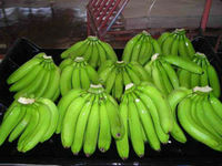 green and yellow banana for export