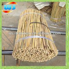 Produtos agrícolas / produtos agrícolas / Support planta que cresce de bambu