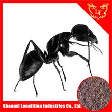 black ant 10:1 extract, 10:1 Radix Astragalus extract