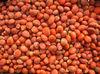 Cycas revoluta seeds