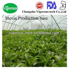 natural pure bulk plant extract stevia sugar