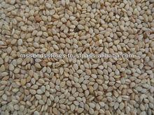 Moon Star Best Quality Natural Sesame Seeds
