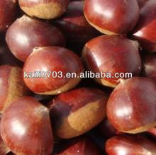 best tasted china chestnut