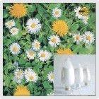 High quality stevia powder extract/stevia extract powder/stevia equipment