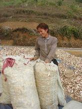 Cheap Price Cassava Chip 06
