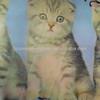 100% polyester fabric cat print fabric