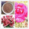 Damask Rose extract powder
