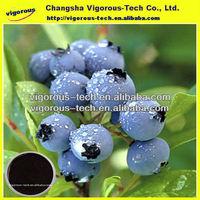 organic acai powder/acai berry extract/acai berry juice