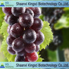 The lowest price for top grade natural grape seed p.e.