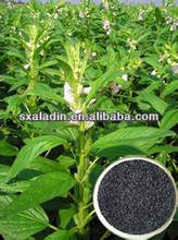 100% natural Black Cohosh Extract of herb medicine
