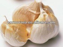 100% natural Garlic extract 10:1/100:1