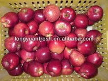 fresh apple from gansu
