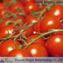 high quality lycopene,natural tomato extract power
