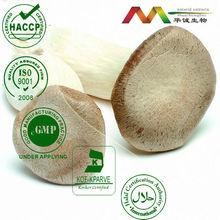 100% natrual Shiitake mushroom Extract 10%,15%,20%,25%,30%polysaccharide