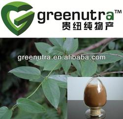 Gymnema Silvestre Extract/Gymnemic Acids 10%-75%(HPLC)