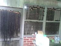 Myanmar Remy Bulk Hair Natural
