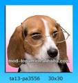 Cartel promoción in dog