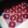 import export fruits fresh blush red color delicious and importers and exporters of dubai dry fruits
