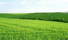 Jovem orgânica cevada deixa pó contém solúveis e insolúvel fibra para a gestão de peso