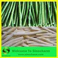 Iqf blanco entero/espárrago verde congelado