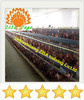chicken layer battery cages