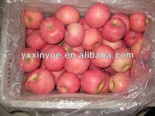 China Fresh Red Fuji Apple