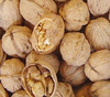 walnuts in shell from DAYAO CHINA