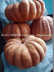 fresh pumpkins