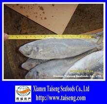 Low Price Frozen Horse Mackerel Whole Fish