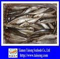 hot vendre fruits de mer congelés de poisson sardine entier