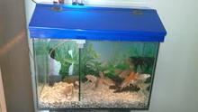 cheapest acrylic fish tank in home and garden of arowana fish