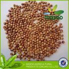 bulk grain sorghum for brewing alcohol for sale