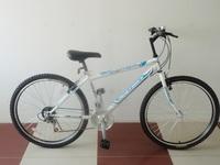 Tianjin Basic Hot Mountain Bike/Bicycle for Men