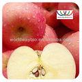 Natural puro extracto de manzana/apple peel extracto