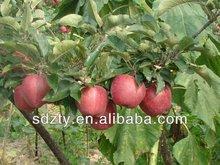 mela frutta fresca