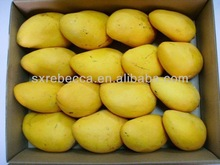 100% Water soluble natural drink material mango juice powder