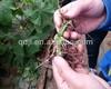 Chitosan organic fertilizer & soil conditioner/nematocide