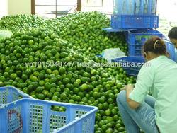 Fresh Lime, Lemon