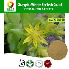 stringy stonecrop extract / Stringy Stonecrop Herb P.E.