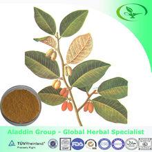 Natural Thorny Elaeagnus Leaf Folium Elaeagni Chinese viscum herb extract