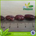 lose grundstoffe getrocknet lila bohnen für koch bohnen in dosen