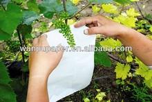 grape covering paper bag
