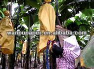 banana covering paper bag