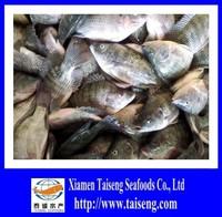 Farm Raised Frozen Tilapia Fish On Sale