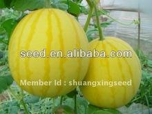 Golden King hybrid watermelon seed yellow fruit