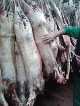 Fresh Sheep / Mutton Carcasses