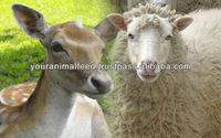 Livestock Grower Feed