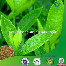 egcg extraction/green tea extraction polyphenols powder 50%-98%